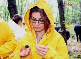 Günümüzde 'siyah Elmas' Olarak Bilinen Ve Kilogramı 2 Bin İle 5 Bin Euro Arasında Değişen Trüf Mantarının Samsun'da Olup Olmadığının Araştırılması İçin Orman İşletme Genel Müdürlüğü Çalışma Başlatıldı