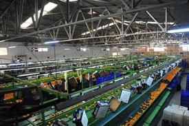 Dünyanın En Kaliteli Mandalinası Satsuma'nın Yetiştiği İzmir'in Seferihisar İlçesinde 2014 Yılı Mandalina Sezonu Başladı.