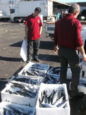 1 Eylül İtibariyle Denize Açılan Balıkçılar Son 4 Gündür Sezonun En Verimli Balığını Avlıyor.