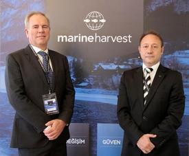 Dünyanın En Büyük Somon Üreticisi, Norveçli 'marine Harvest', Türkiye Pazarına Girdi.