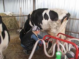 Edremit İlçesinde 110 Dönüm Yere Çiftlik Kuran Ve Büyükbaş Hayvancılığa Başlayan Genç Bayan, 24 Saat Süt Hizmet Vermeye Başladı.